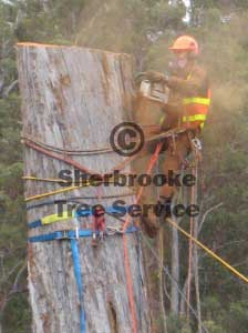 Tree Lopping and Removal