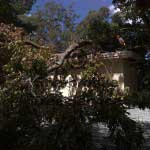 storm damage tree on roof