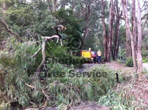 storm damaged tree fallen through fenceline