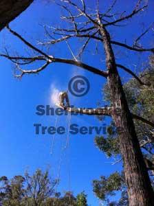 monbulk tree lopping