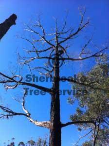 monbulk tree service