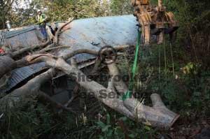 excavator loads wood belgrave