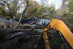 storm damaged tree work