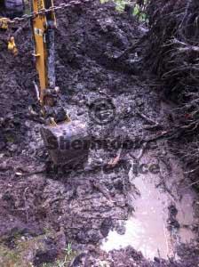 tree stump belgrave