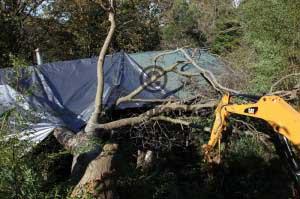 tarp covering storm damage tree