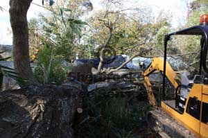 cardinia shire often gives us some tricky tree removals