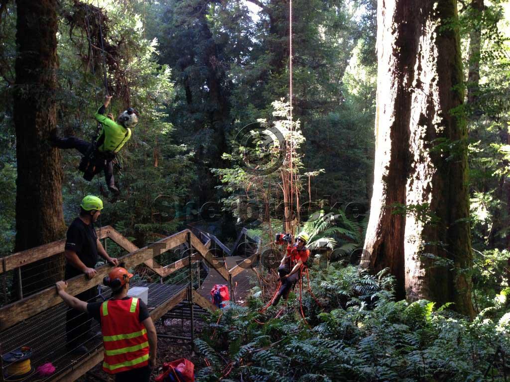 tree climbing warburton
