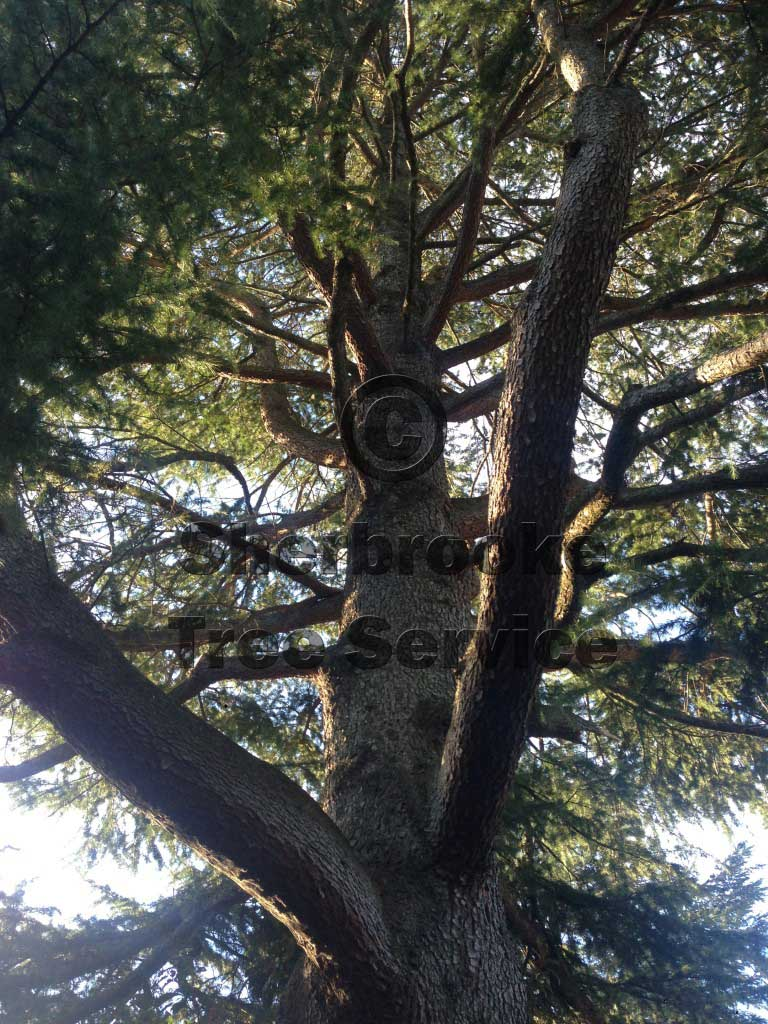 tree pruning emerald