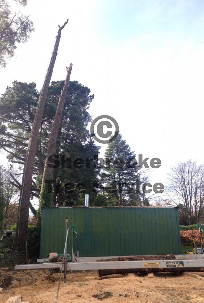 Tree Removal Ferny Creek