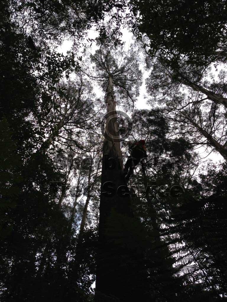 tree removal kalorama