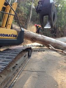 big-tree-cutting