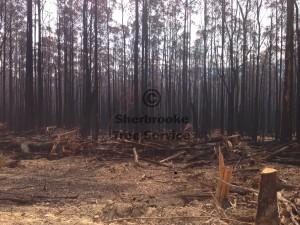 bushfire-tree-company