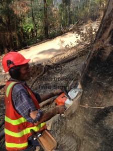 bushfire-tree-felling