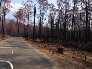 bushfire-tree-removal
