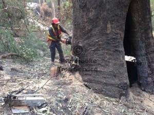 dangerous-tree-removal