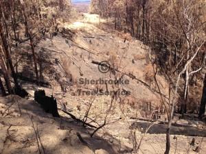 fire-damaged-bushfire-trees