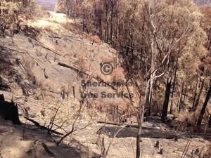 fire-killed-tree-work