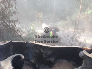 hazard-tree-removal