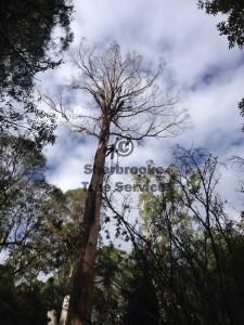 kallista-dead-tree-removal