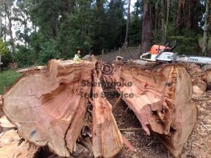 kallista-tree-lopping