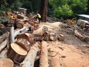 kallista-tree-removal