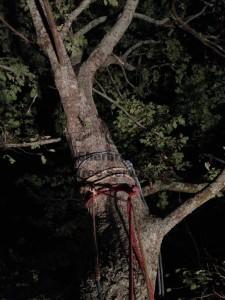 olinda-tree-work