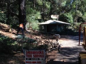 sherbrooke-tree-service