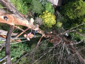 tree-climbers-kallista