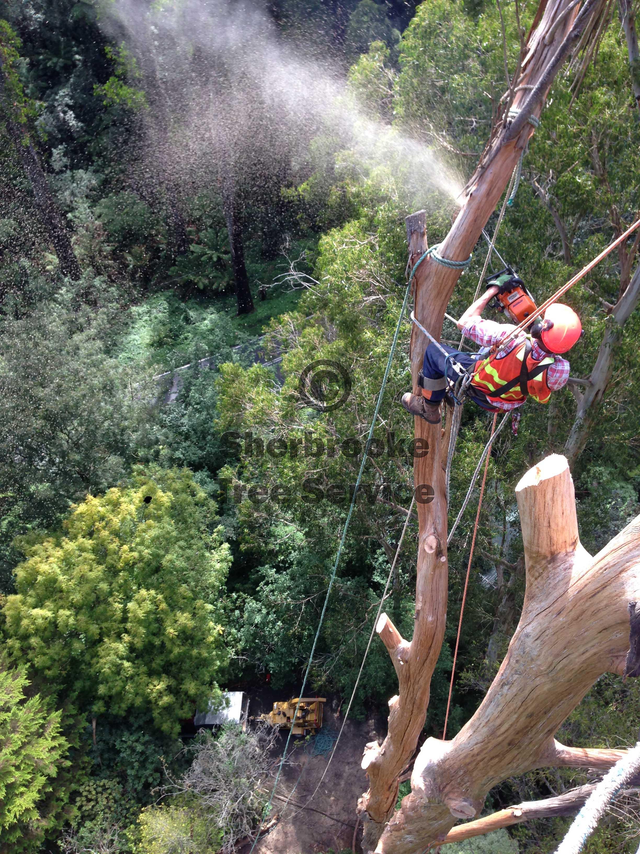 Kallista Tree Removal | Sherbrooke Tree Service