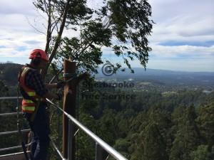 tree-cutting-olinda