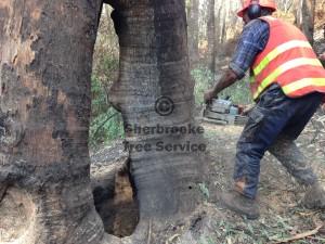tree-felling-fire-killed