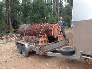 tree-removal-cockatoo