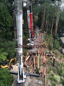 tree-removals-olinda
